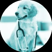 Ronds_Animal-Health-2